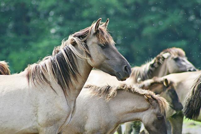 Care sunt cei mai daunatori paraziti interni intalniti la cai?