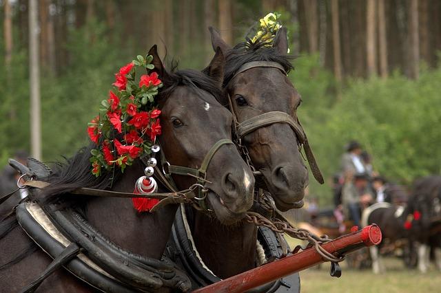 Solutii eficiente pentru antiparazitare cai