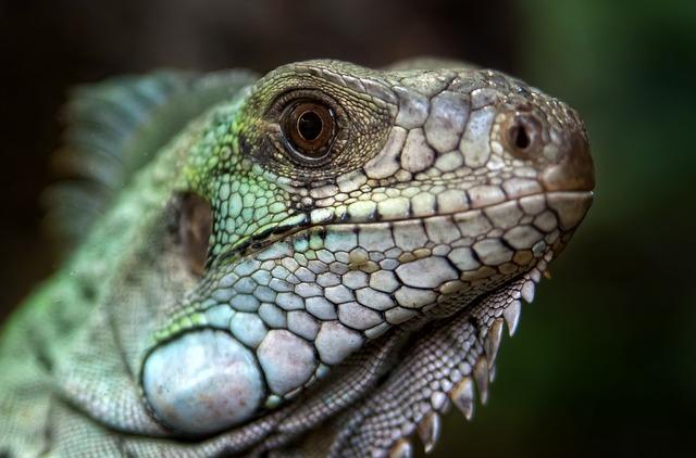 Care sunt cele mai neobisnuite animale de companie?