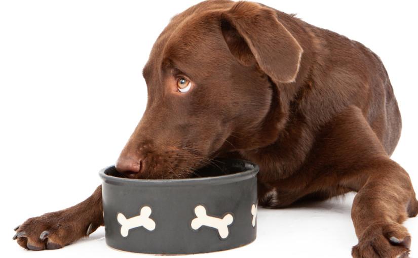 Hrana pentru animale