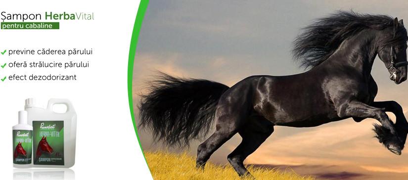 Herba-Vital, samponul ce pastreaza nobilitatea cailor